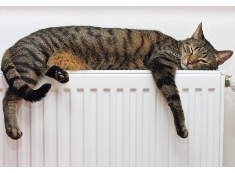 Keeping-your-cat-warm-in-cold-weather